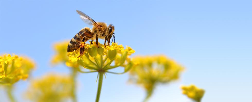 SOPREMA & la biodiversité