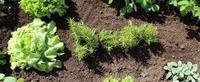 Toitures potagères - Sopranature® Cultiva