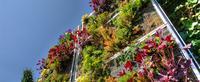 Végétalisation de façades - Sopranature®