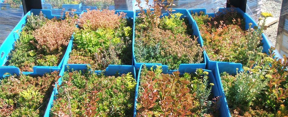 La Toundra'Box : le système de végétalisation prêt-à-poser